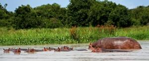 St. Lucia Nijlpaard