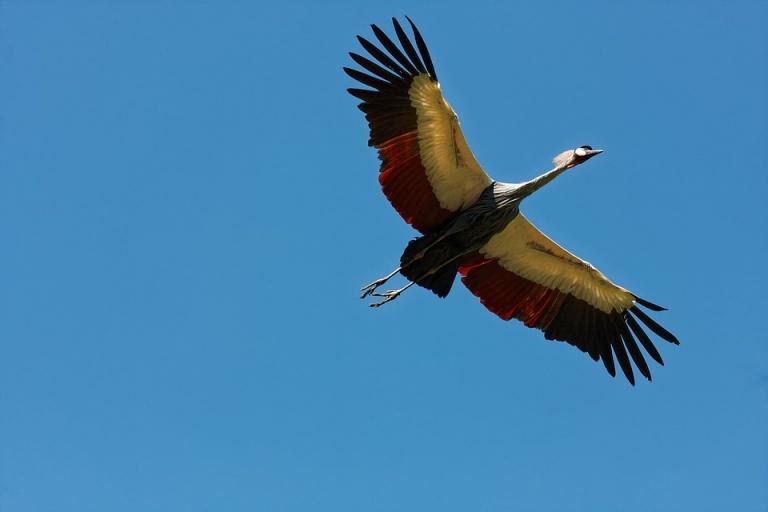 Vogel Aruba