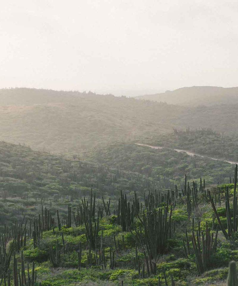 Aruba Foto 1