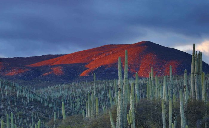 Mexico Foto 1