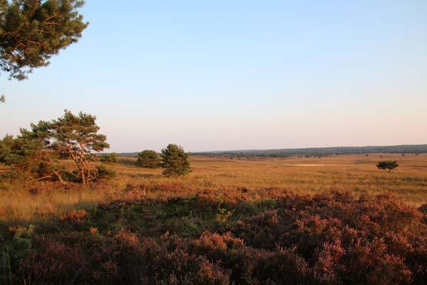 Landschap Veluwe