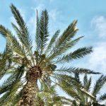 Palm trees vakantie